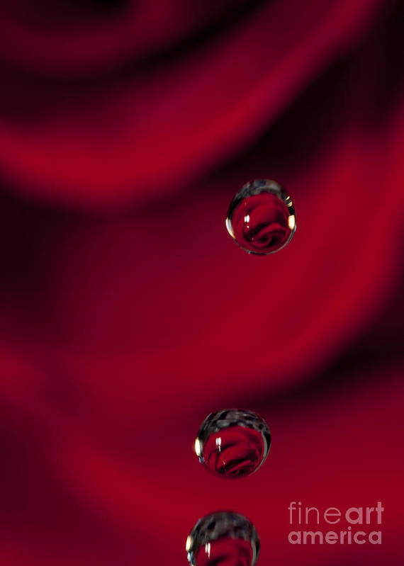 Macro Art Print featuring the photograph Macro Water Drop Reflection And Flower 1 by Nicola Gordon