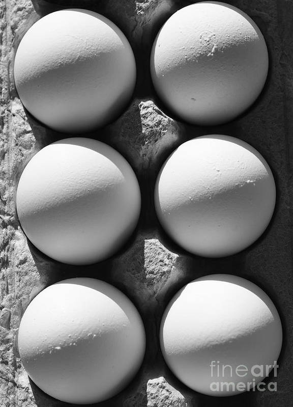 Eggs Art Print featuring the photograph Many Moons by Luke Moore