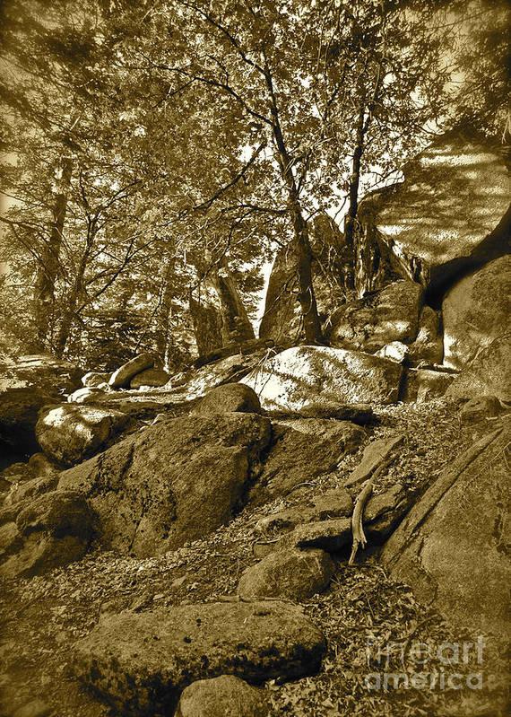 Maynard Art Print featuring the photograph Rocks And Trees 2 Sepia by Maynard Smith