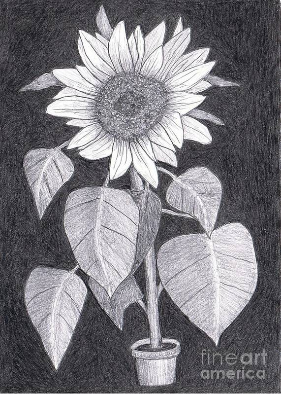 sunflower Art Print featuring the painting Sunflower by Teri Naomi