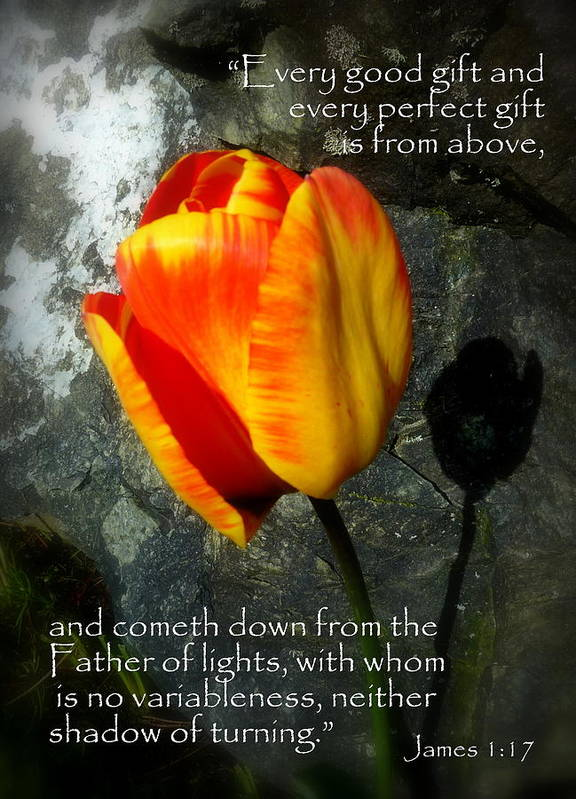 Cindy Art Print featuring the photograph Two Tulips Shadow Scripture by Cindy Wright