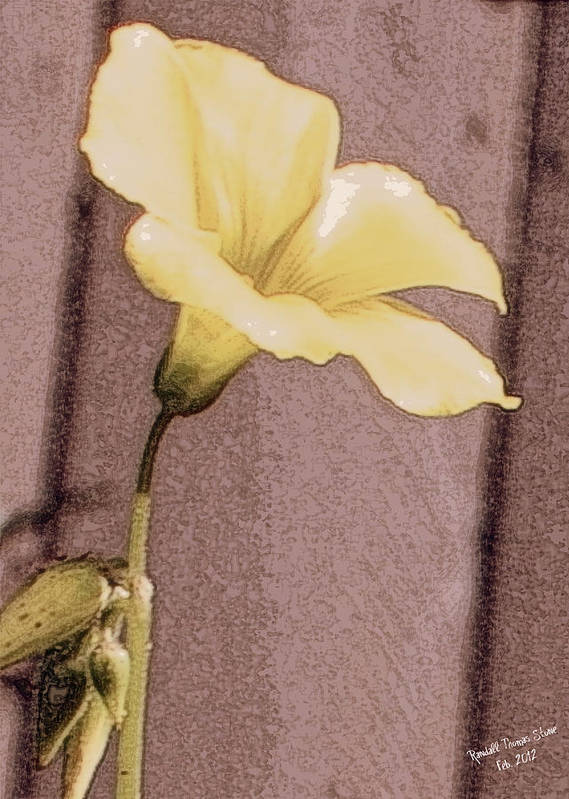 Flower Art Print featuring the photograph Yellow Wood Sorrel by Randall Thomas Stone