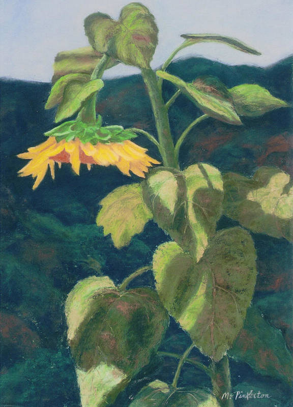 Flower Art Print featuring the painting Sunflower by Miriam Pinkerton