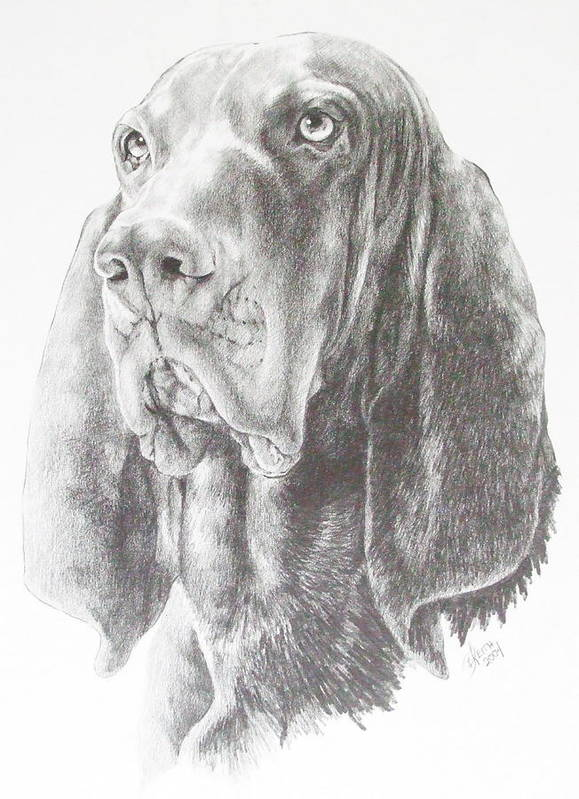 Purebred Dogs Art Print featuring the drawing Black And Tan Coonhound by Barbara Keith