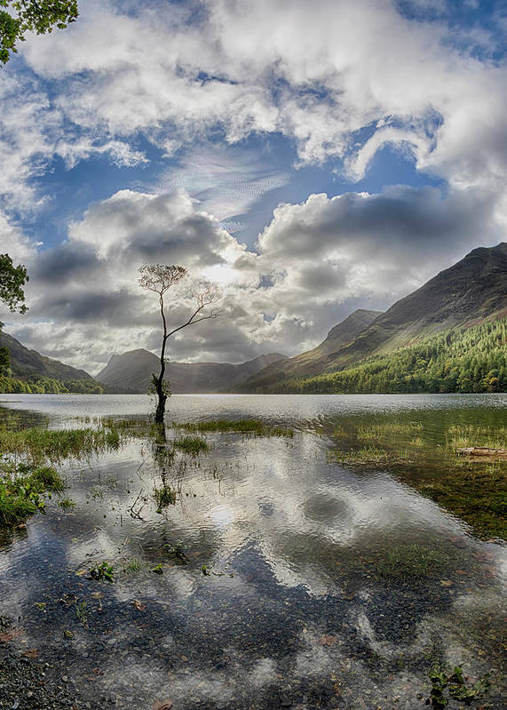 Buttermere Art Print featuring the photograph Buttermere Tree by Graham Moore