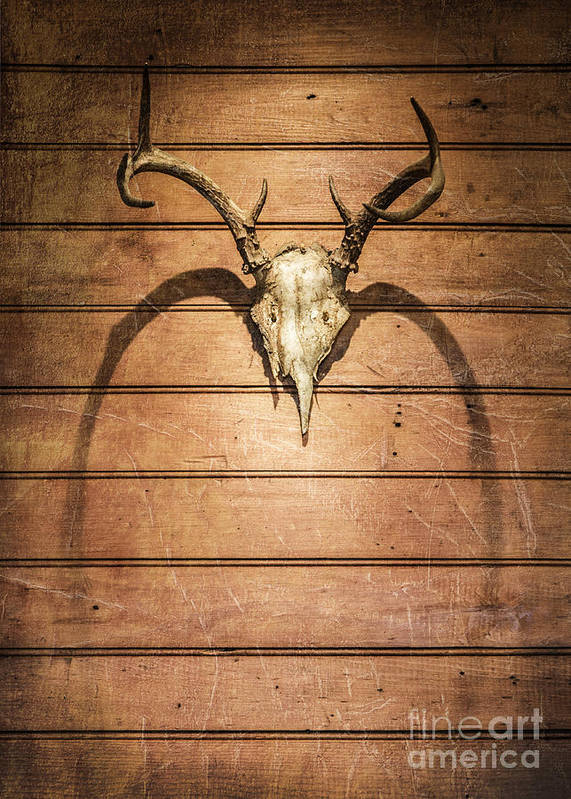 Skull Art Print featuring the photograph Antlers by Diane Diederich