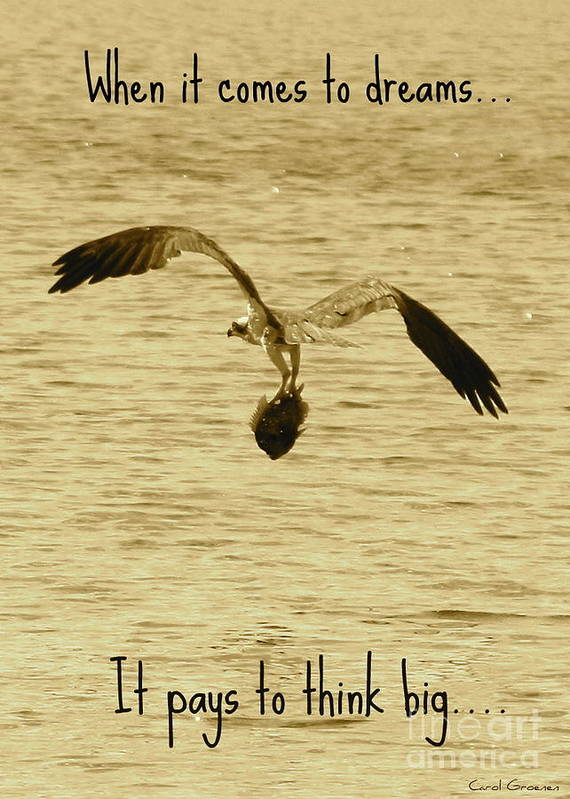 Osprey Art Print featuring the photograph Big Dreams by Carol Groenen