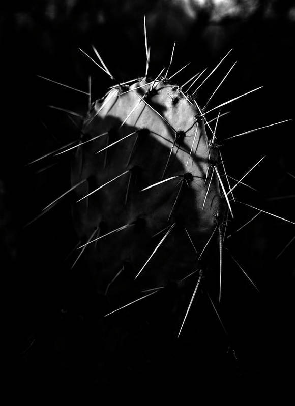 Cactus Art Print featuring the photograph Bw Cactus Thorns by Fine Art