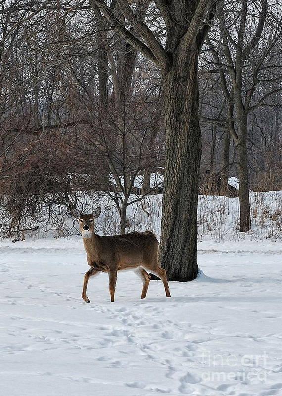 Deer Art Print featuring the photograph Cutting Through by Pamela Baker