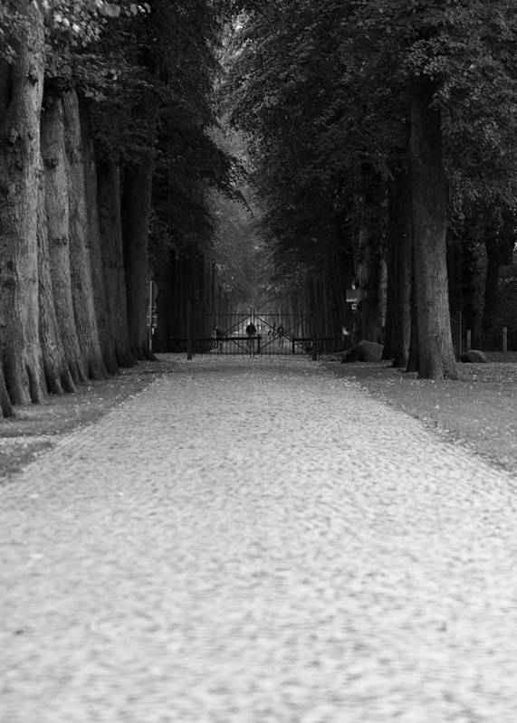 Park Art Print featuring the photograph Gated Path by Edward Myers