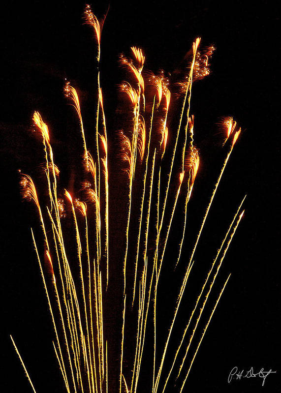 July 4th Art Print featuring the photograph Goldenrod by Phill Doherty