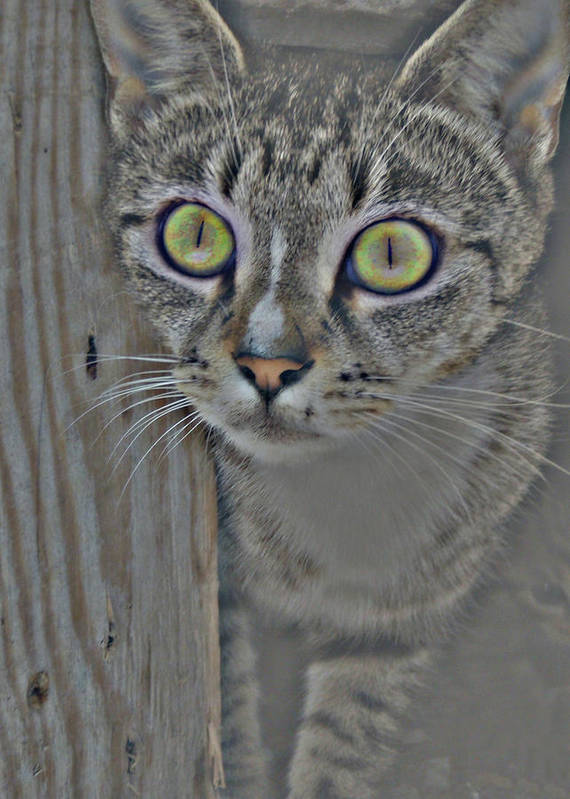 Cat Art Print featuring the photograph Hypnotize by JAMART Photography
