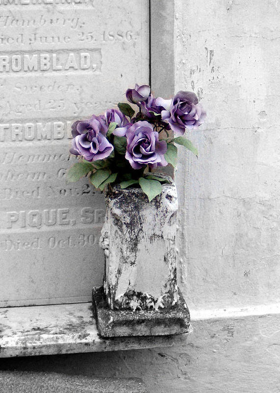 Roses Art Print featuring the photograph Lafayette No One Purple Roses by Heather S Huston