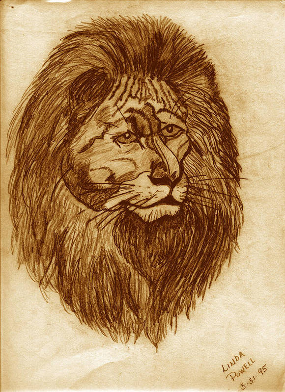 Drawing Art Print featuring the digital art Lion by Linda Powell