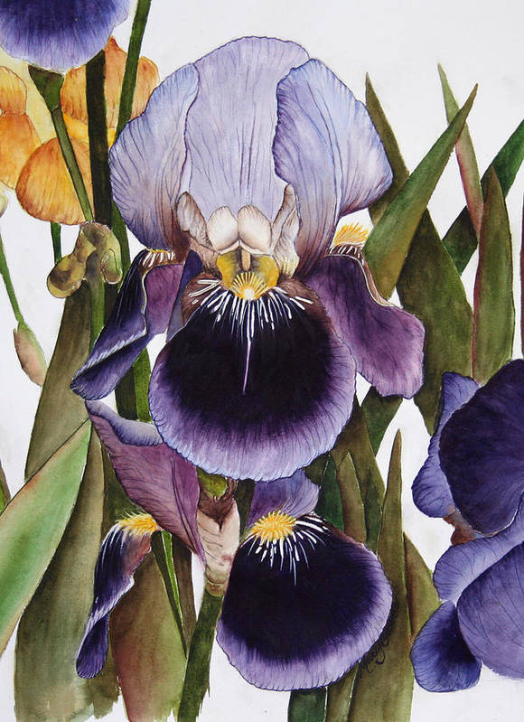 Iris Art Print featuring the painting My Iris Garden by Mary Gaines