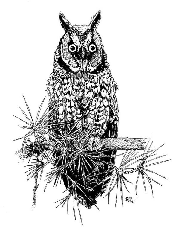 Owl Art Print featuring the drawing owl by Stephen Taylor