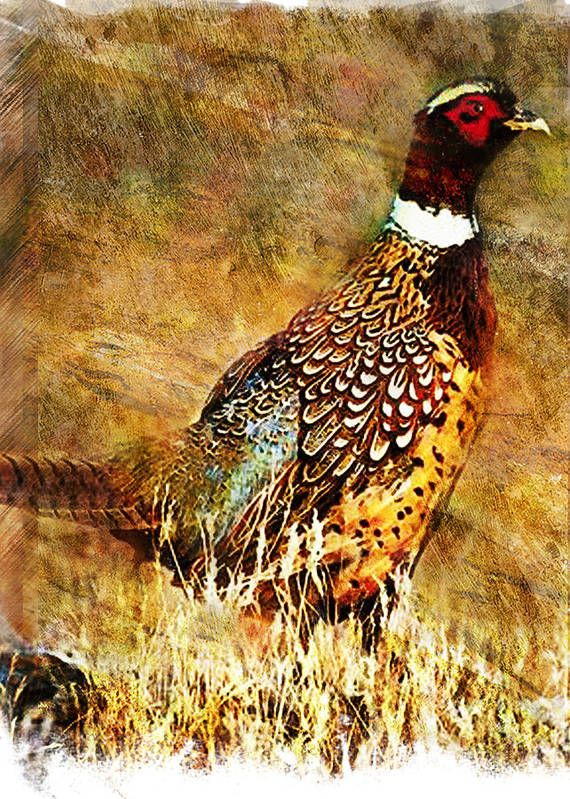 Pheasant Art Print featuring the painting Pheasant by William Martin