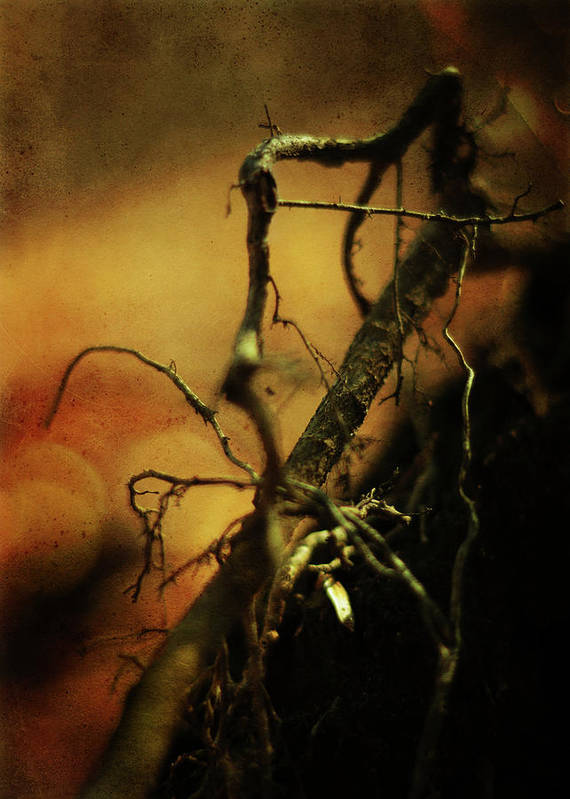 Tree Print featuring the photograph Roots Of Life by Rebecca Sherman