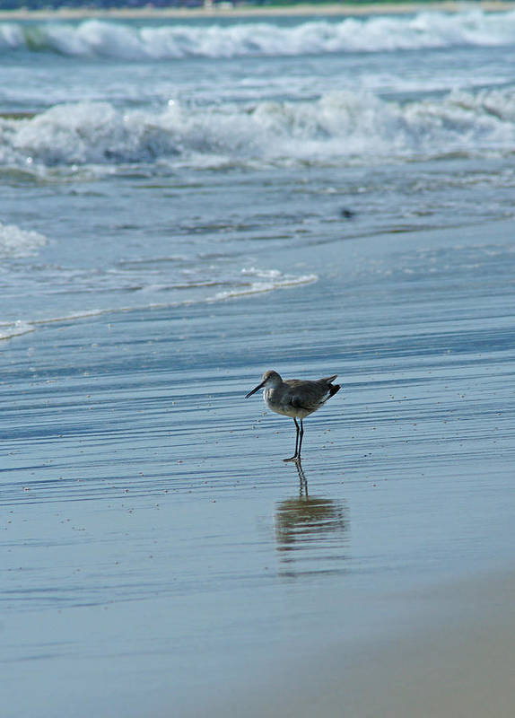 Sandpiper Art Print featuring the photograph Sandpiper On The Beach by Randy Harris