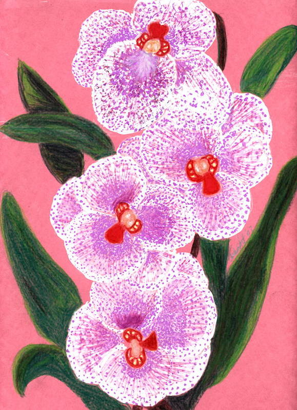 Floral Pink Orchid Art Print featuring the drawing Spotted Orchid Against A Pink Wall by Carliss Mora