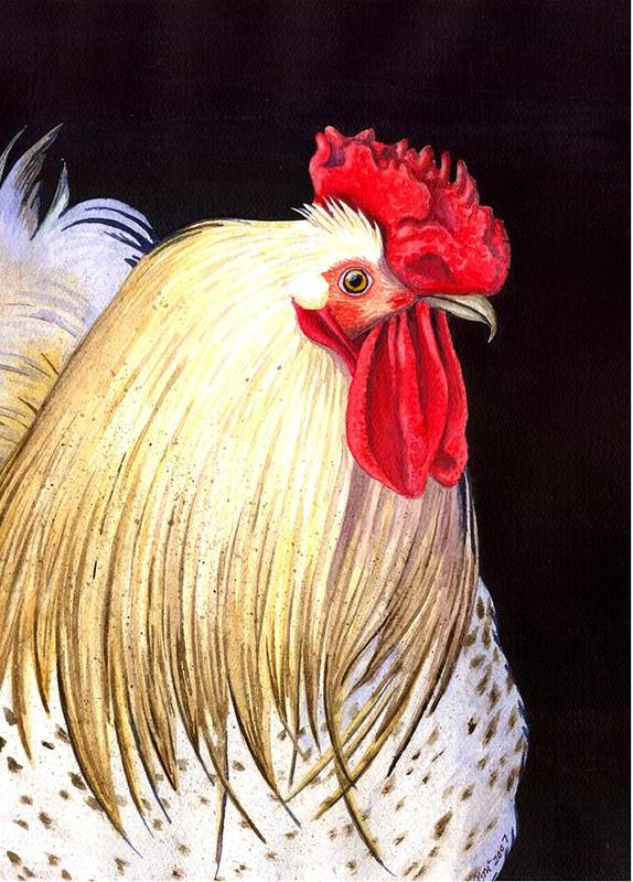 Rooster Art Print featuring the painting Studdley by Catherine G McElroy