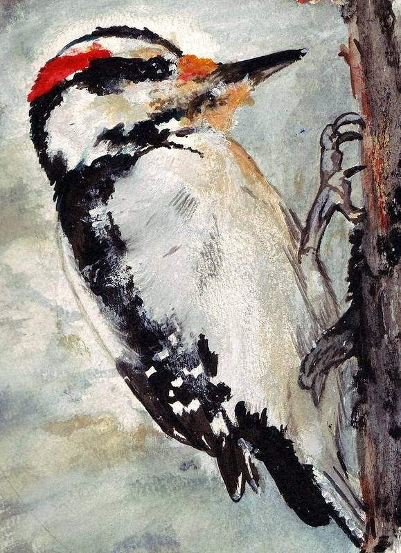 Hairy Woodpecker Art Print featuring the painting Tappity Tap by Debra Sandstrom