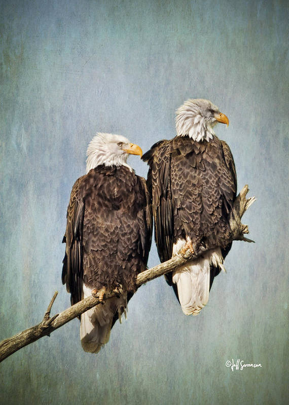 Eagles Art Print featuring the photograph Textured Eagles by Jeff Swanson