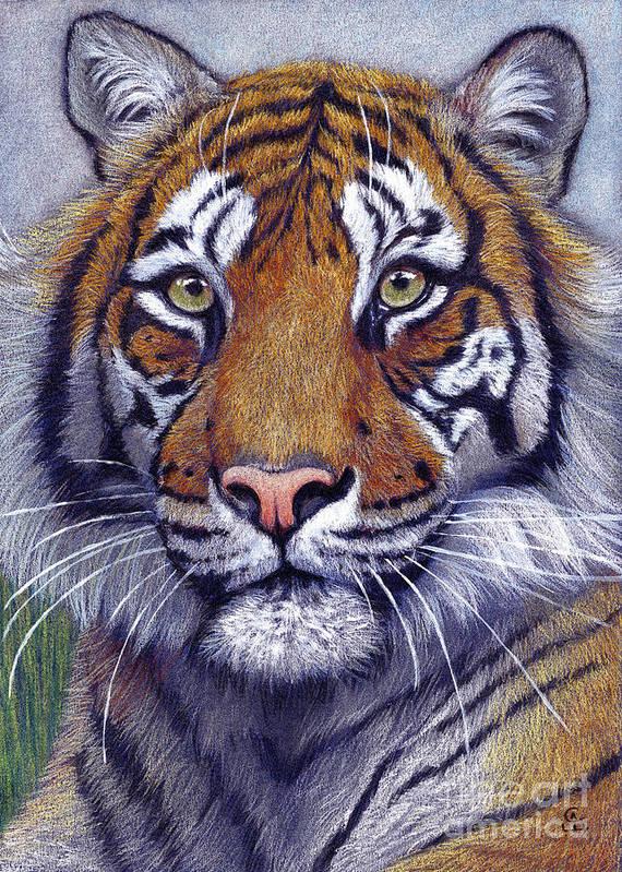 Toger Art Print featuring the drawing Tiger Portrayal by Svetlana Ledneva-Schukina