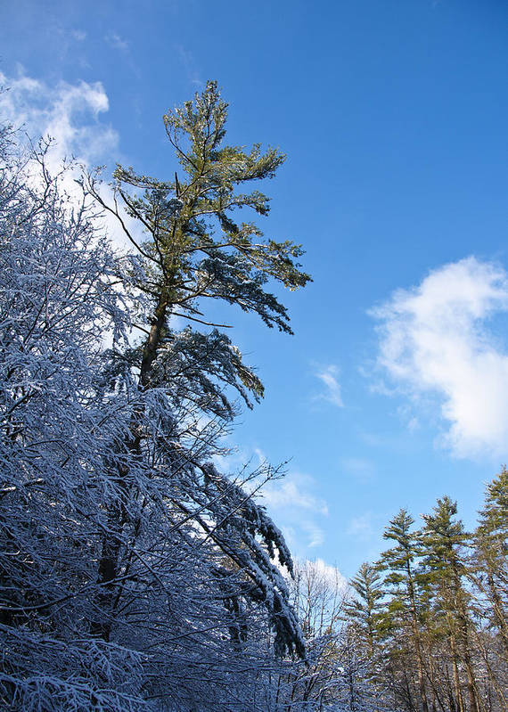 Winter Art Print featuring the photograph Winter Tree And Sky by Edward Myers