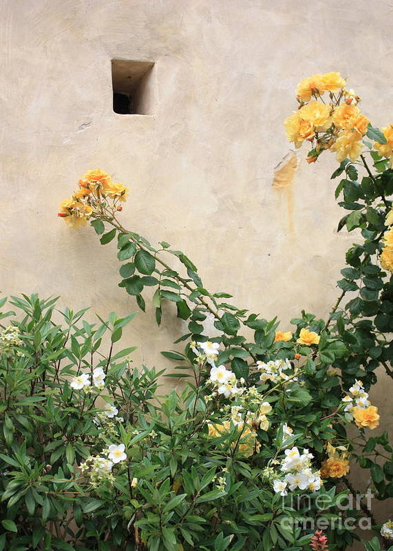 Yellow Roses Art Print featuring the photograph Yellow Roses And Tiny Window At Carmel Mission by Carol Groenen