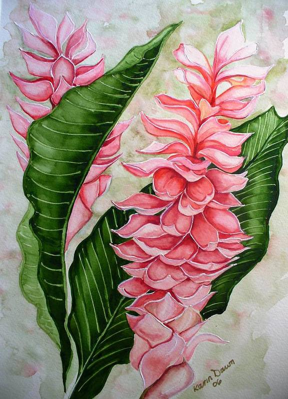 Flower Painting Floral Painting Botanical Painting Ginger Lily Painting Original Watercolor Painting Caribbean Painting Tropical Painting Art Print featuring the painting Pink Ginger Lilies by Karin Dawn Kelshall- Best