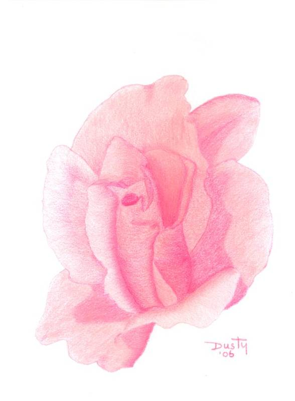Rose Art Print featuring the drawing Strawberry Shortcake by Dusty Reed