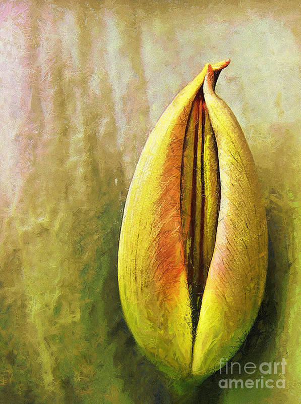 Art Print featuring the painting Tulip by Odon Czintos