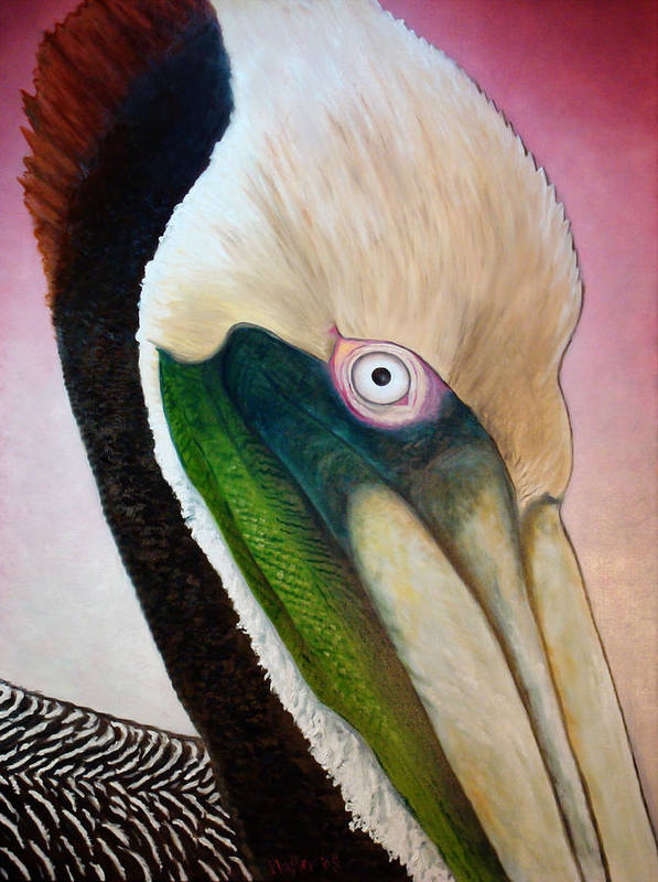 Pelican Art Print featuring the painting Pelican Peeking by Scott Plaster