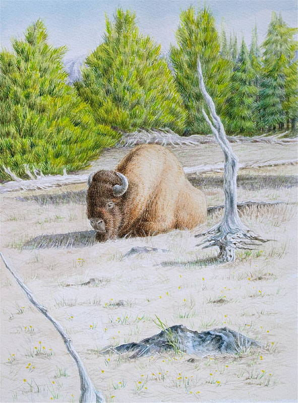 Buffalo Art Print featuring the painting A Buffalo Sits In Yellowstone by Michele Myers