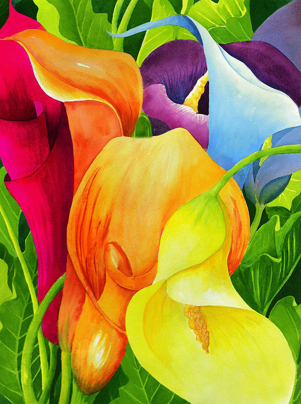 Flower Paintings Art Print featuring the painting Calla Lily Rainbow by Janis Grau