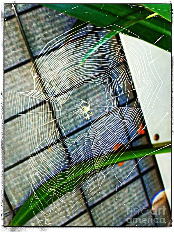Charlotte Print featuring the digital art Charlotte's Web by Meagan Hoelzer