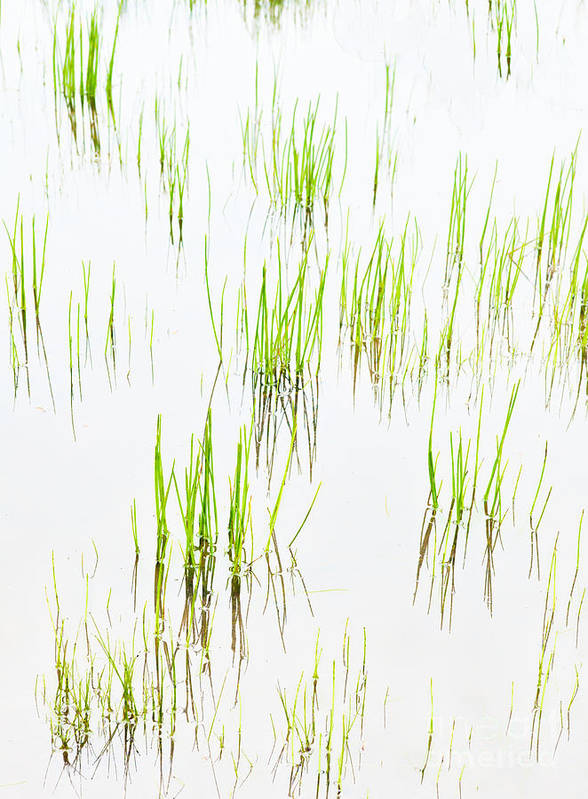 North Carolina Art Print featuring the photograph Colony Of Grass by Dan Carmichael