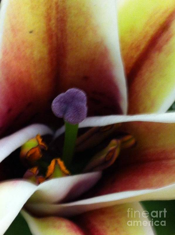 Lily Art Print featuring the photograph Etched by Nona Kumah