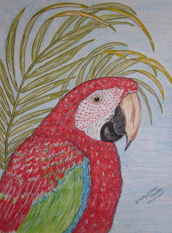 Green Wing Macaw Art Print featuring the painting Green Winged Macaw by Kathy Marrs Chandler