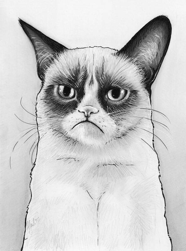 Grumpy Cat Print featuring the drawing Grumpy Cat Portrait by Olga Shvartsur