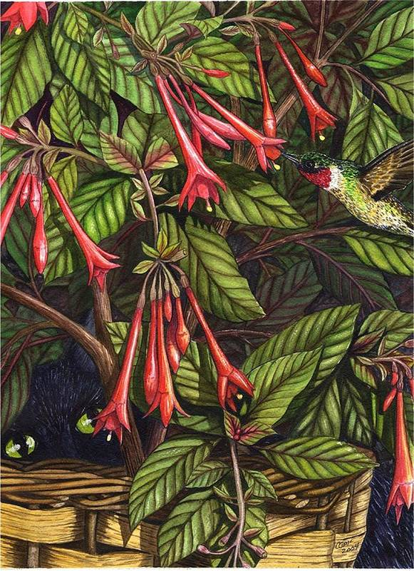 Fuchsia Art Print featuring the painting Lurking by Catherine G McElroy