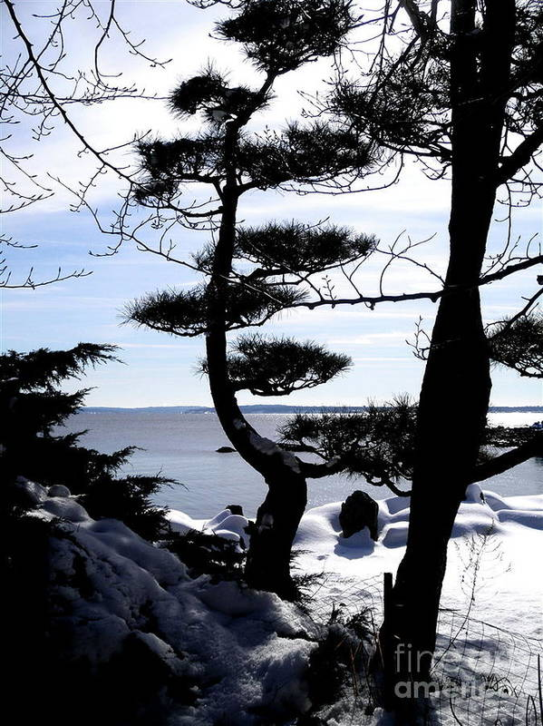 Dlgerring Art Print featuring the photograph Pine Tree Silhouette by D L Gerring