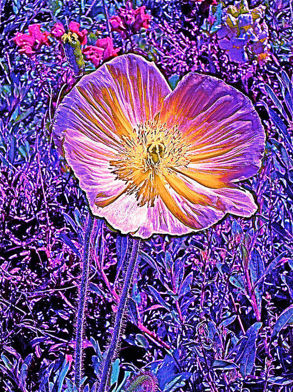 Flowers Art Print featuring the photograph Poppy 3 by Pamela Cooper