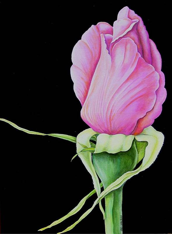 Flowers Art Print featuring the painting Pretty In Pink Rose Bud by Carol Sabo