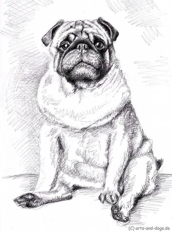 Dog Art Print featuring the drawing Pug Anton by Nicole Zeug