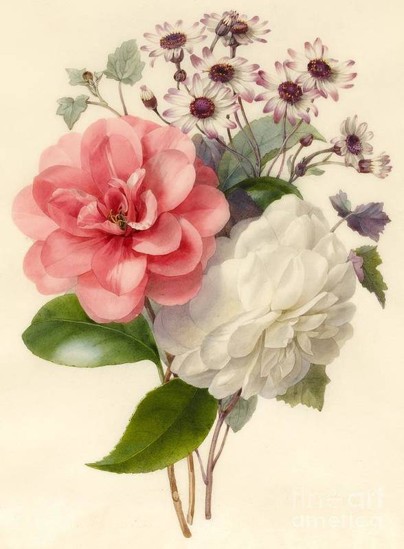 Flower; Camellia Art Print featuring the painting Spray Of Three Flowers by Marie Anne