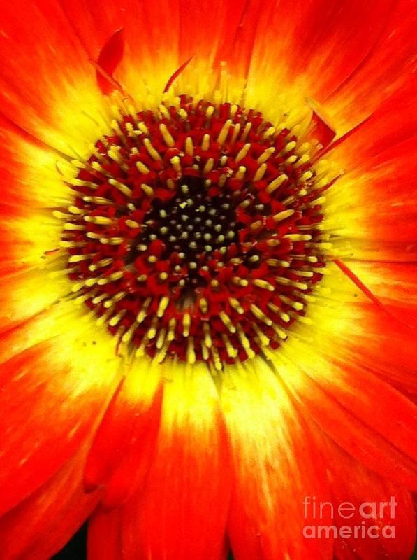 Flowers Art Print featuring the photograph Sunshine by Nona Kumah