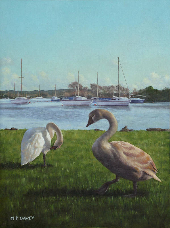 Christchurch Art Print featuring the painting swans at Christchurch harbour by Martin Davey