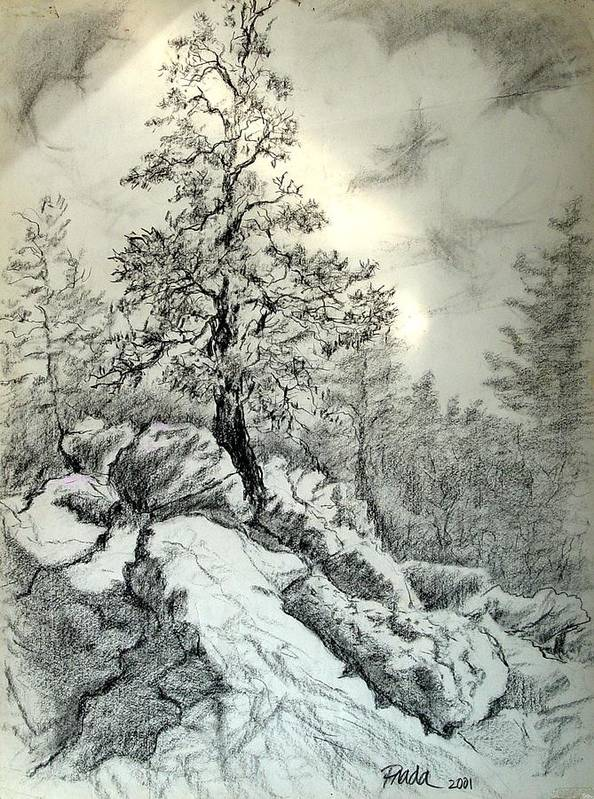 Charcoal Art Print featuring the drawing Tree On The Rocks by Horacio Prada